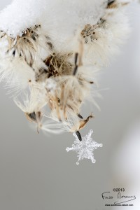 Flocon hiver