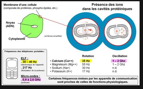 Ions cavites
